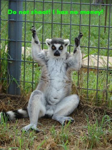 lemurshoot1.jpg