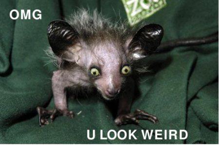 OMG u look weird